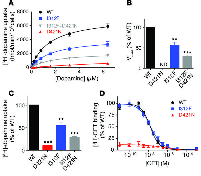 Functional characterization of DAT-I312F and DAT-D421N by [3H]-dopamine ...