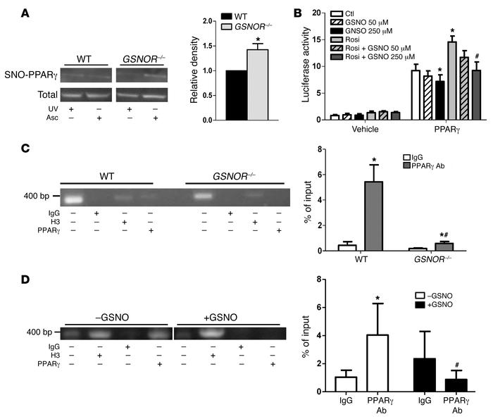 GSNOR–/– MSCs have enhanced constitutive S-nitrosylation of PPARγ with ...