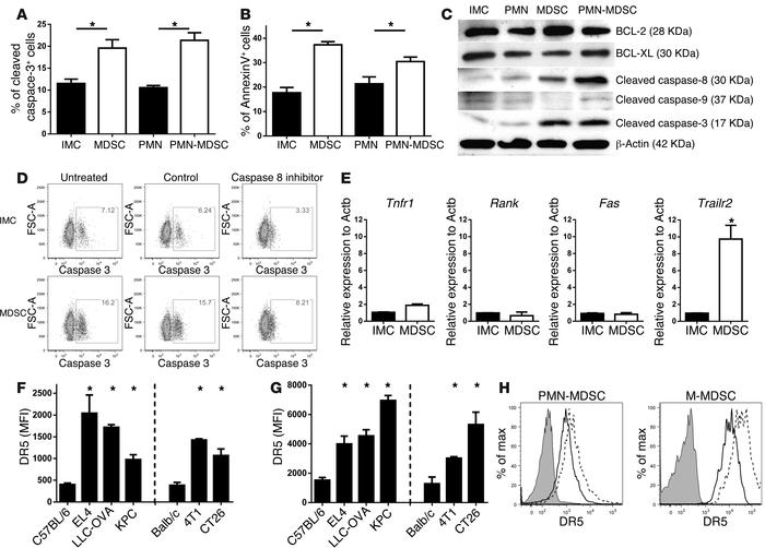 MDSCs undergo rapid apoptosis mediated by upregulation of DR5 expression...
