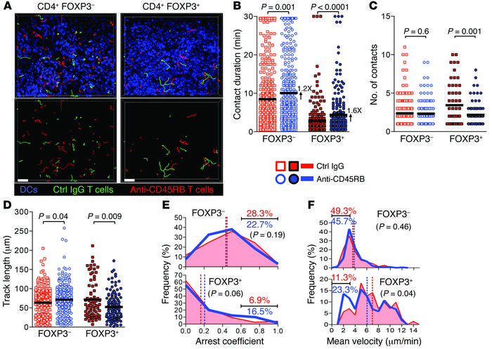 CD45 ligation enhances Treg/DC contacts in vivo. Naive Cd11c-YFP mice re...