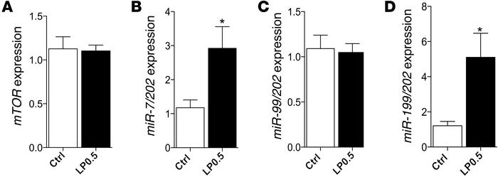 LP0.5 exposure during pregnancy regulates mTOR signaling in adult mice b...