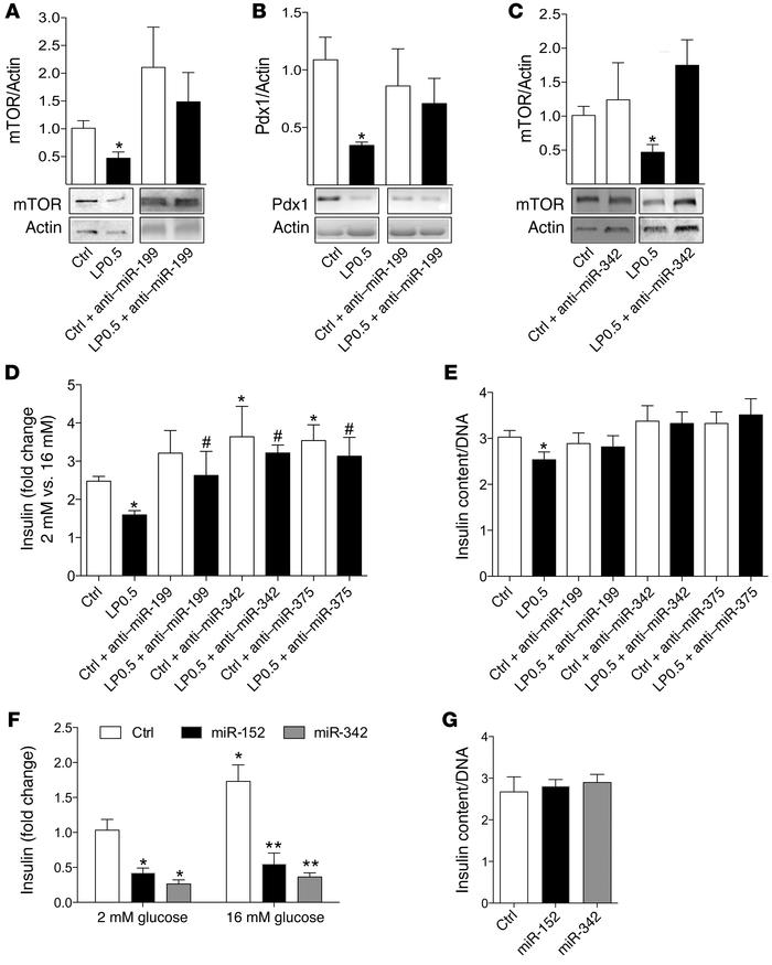 miR-199a-3p and -342 regulate mTOR protein levels and insulin secretion ...