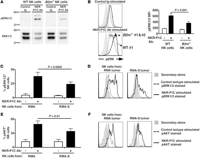 NK cells infiltrating MHC class I–deficient tumors exhibit impaired sign...