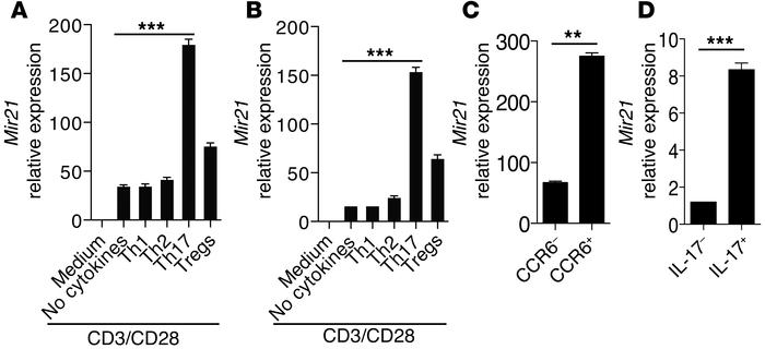 miR-21 is specifically induced in Th17 cells. (A and B) Naive CD4+CD62Lh...