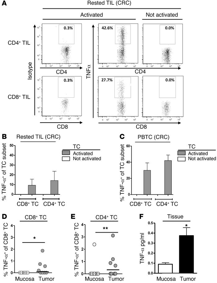 Increased TNF-α expression in activated TCs. (A) TNF-α expression in pol...