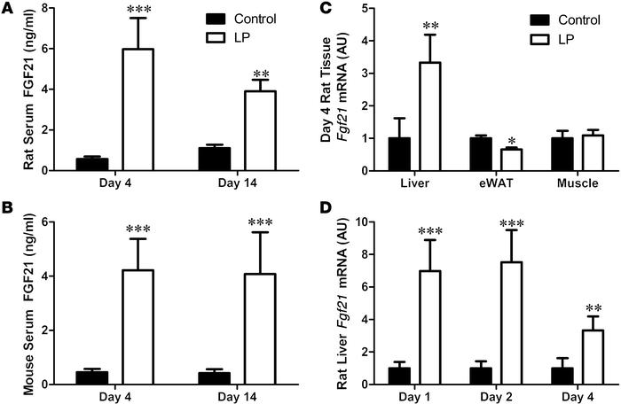 FGF21 is increased by dietary protein restriction in rodents. Rats (A) a...
