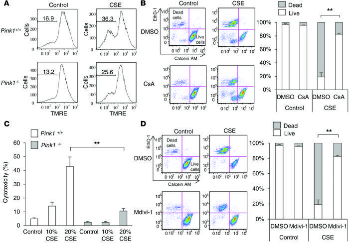 CSE-induced mitophagy decreases ΔΨm, leading to cell death in pulmonary ...