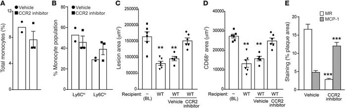 Effect of CCR2 inhibition on atherosclerosis regression and M2 macrophag...
