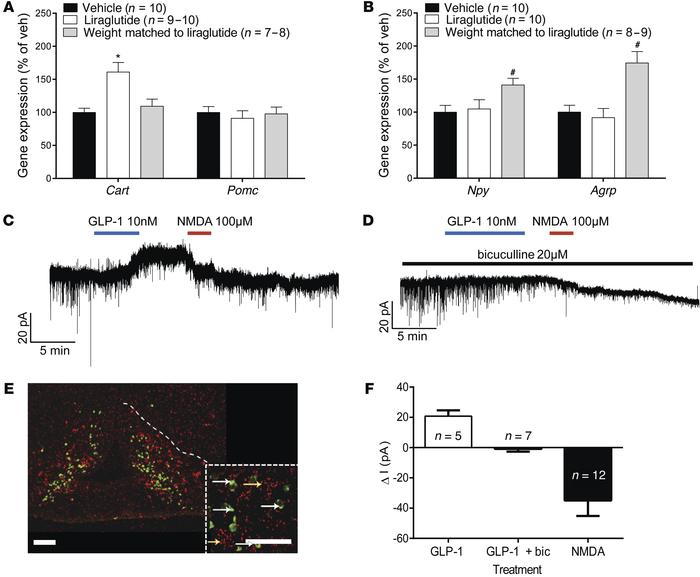 Liraglutide treatment regulates ARC gene expression and ARC neuronal act...