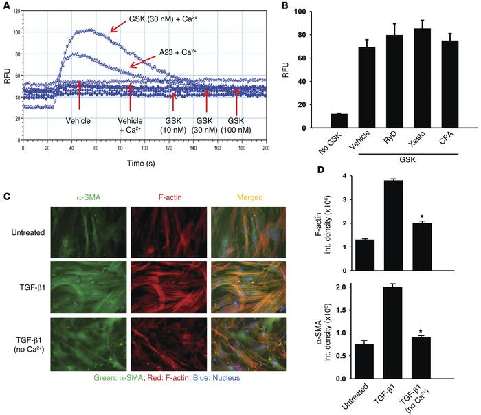 TRPV4-dependent Ca2+ influx from the extracellular space mediates TGF-β1...