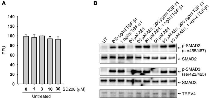 TRPV4 activity potentiates TGF-β1 actions in a SMAD2/3-independent manne...