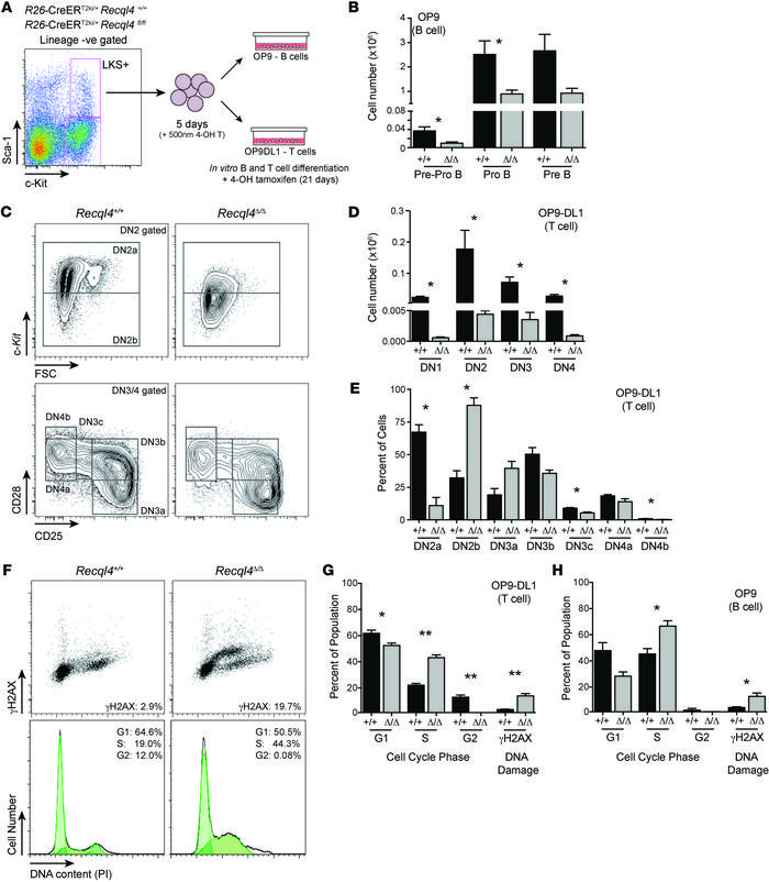 RECQL4 is intrinsically required for B and T cell development. (A) Outli...