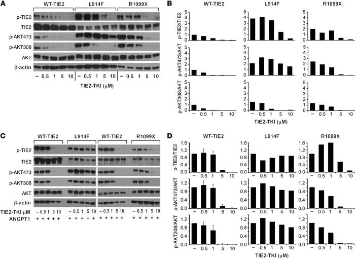 TIE2-TKI effects on TIE2 and AKT phosphorylation in TIE2-WT, TIE2-L914F,...