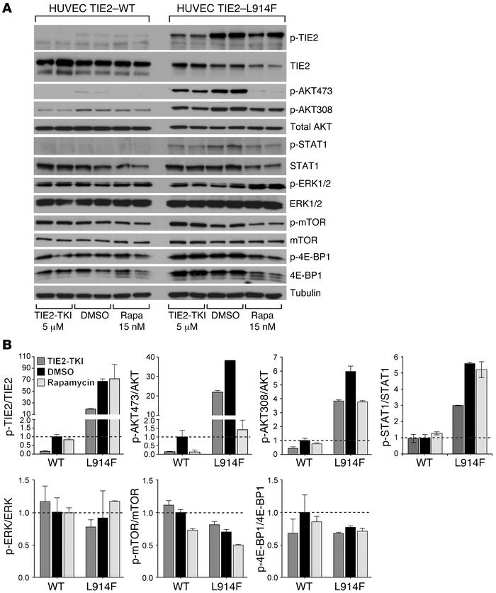 TIE2-TKI and rapamycin effects on signaling pathways downstream of TIE2 ...
