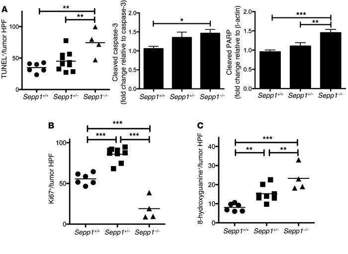 Intratumoral apoptosis and DNA damage are increased in response to compl...