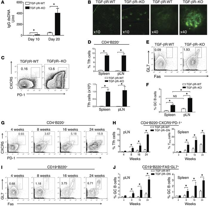 Unrestrained accumulation of Tfh cells in the absence of TGF-β signaling...
