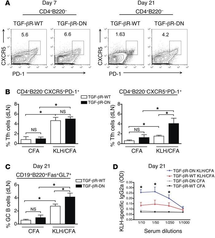 Longer Tfh accumulation in immunized mice with attenuated TGF-β signalin...