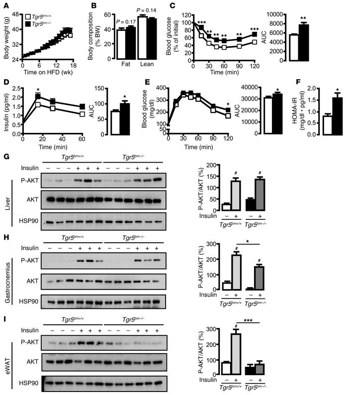 Tgr5bm–/– mice display impaired insulin responsiveness. (A) Body weight ...