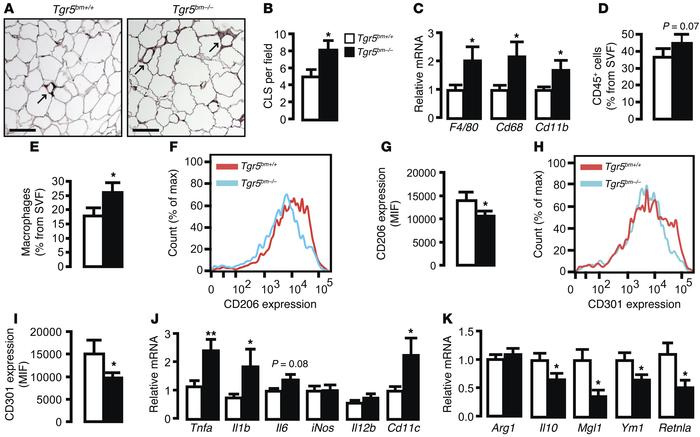 Exacerbated adipose tissue inflammation in Tgr5bm–/– mice. (A) Represent...