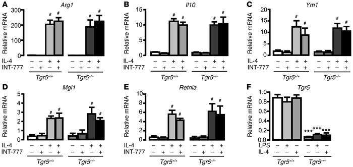 TGR5 is dispensable for IL-4–induced M2 ATM polarization in vitro. (A–E)...