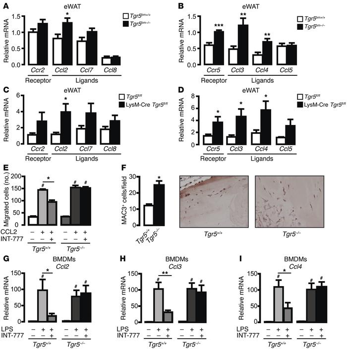 Loss of TGR5 induces chemokine expression and macrophage migration. (A a...