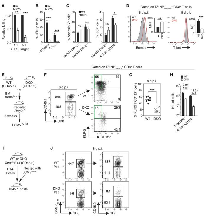 STIM1 and STIM2 regulate the function and differentiation of effector CD...