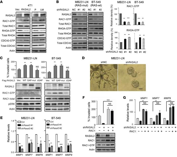 RASAL2 regulates TNBC cell invasion through modulating the activity of s...
