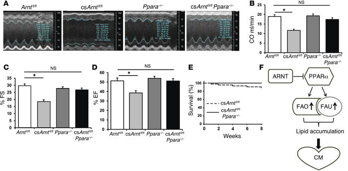 Ppara deletion reverses the cardiac dysfunction of csArnt–/– mice. (A) R...
