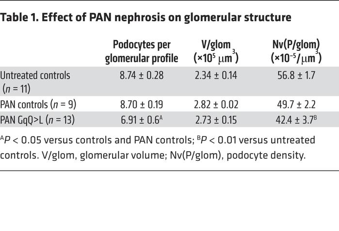 Effect of PAN nephrosis on glomerular structure