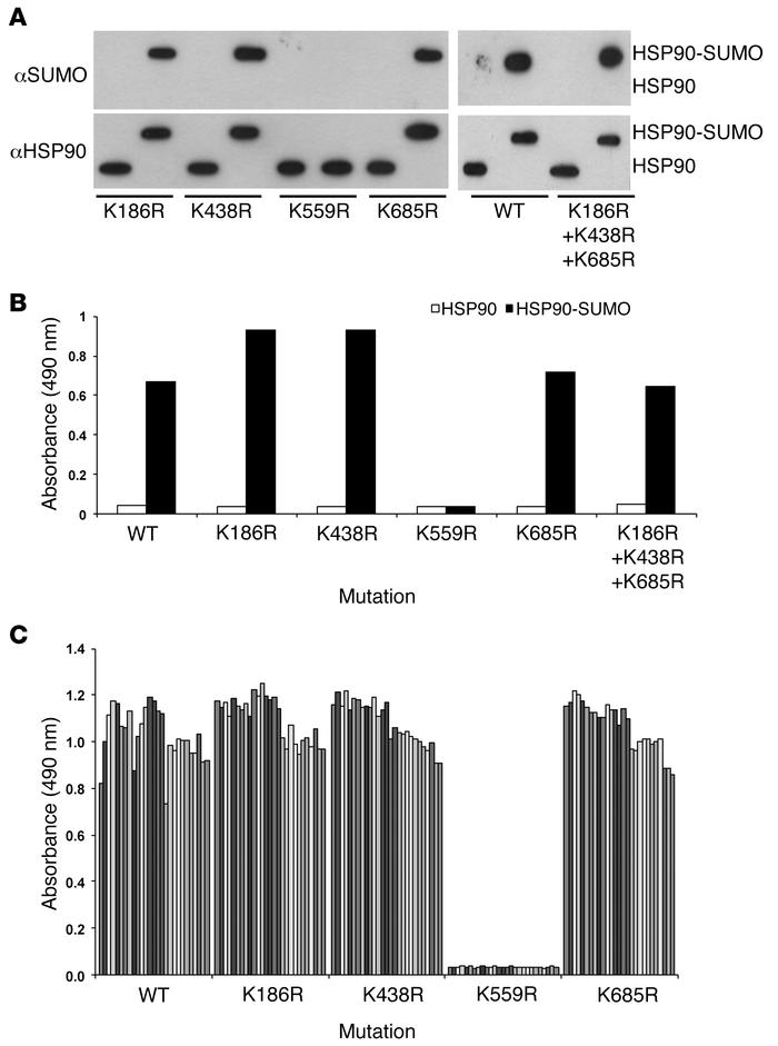Identification of the immunogenic HSP90 sumoylation site. Highly predict...
