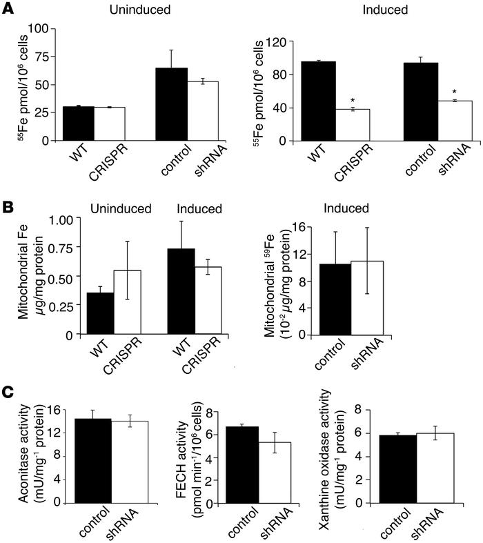 TMEM14C is not required for mitochondrial iron homeostasis. (A) Quantita...