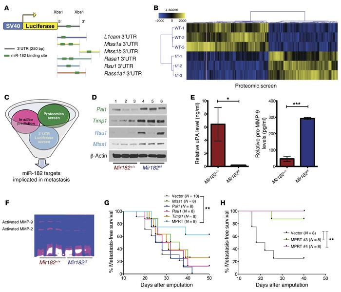 miR-182 target genes cooperate to regulate metastasis. (A) In silico/3′ ...