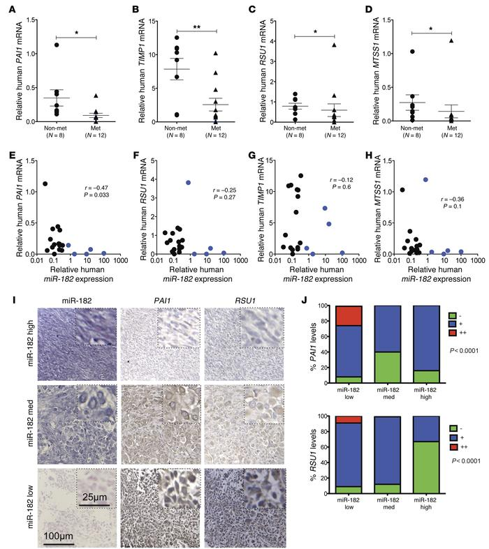 Decreased expression of miR-182 target genes in primary human metastatic...