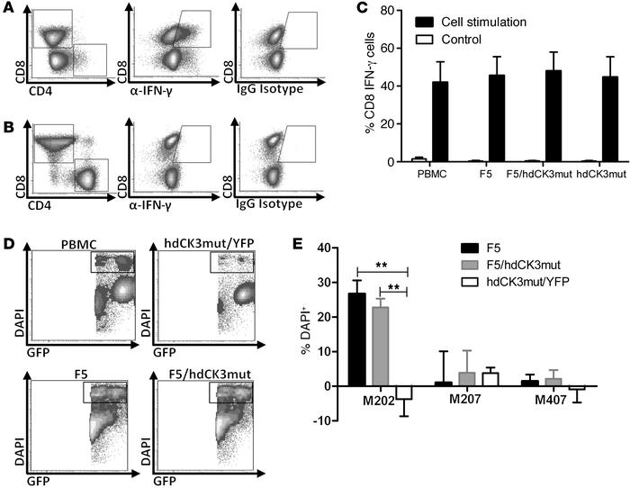 Expression of hdCK3mut does not alter engineered T cell function. (A) In...