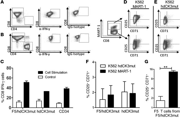 hdCK3mut-expressing T cells developed in vivo are capable of cytokine pr...