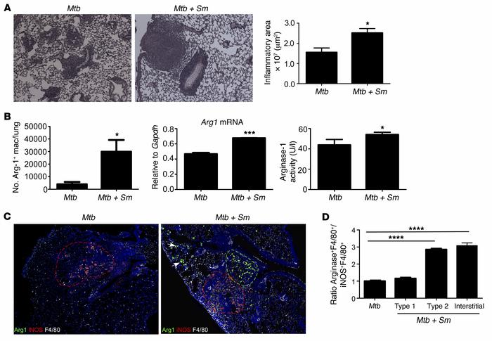 S. mansoni induces arginase-1–expressing type 2 granulomas and exacerba...