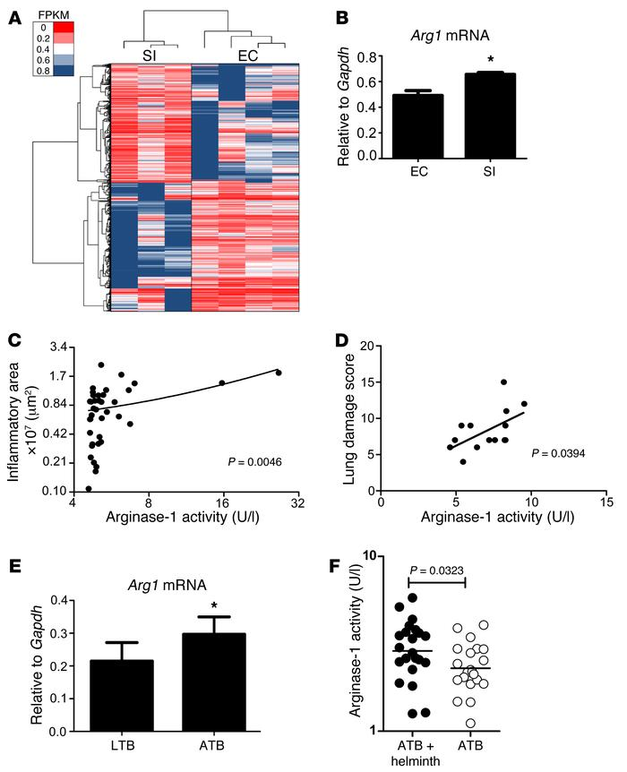 Arginase-1 expression during Mtb infection in genetically diverse mice a...