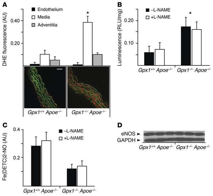 Increased bioavailability of ROS in Gpx1–/– Apoe–/– mice. (A) Vascular s...