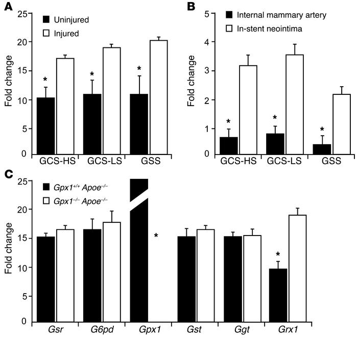 Vascular injury leads to increased expression of GSH-synthesizing and -m...