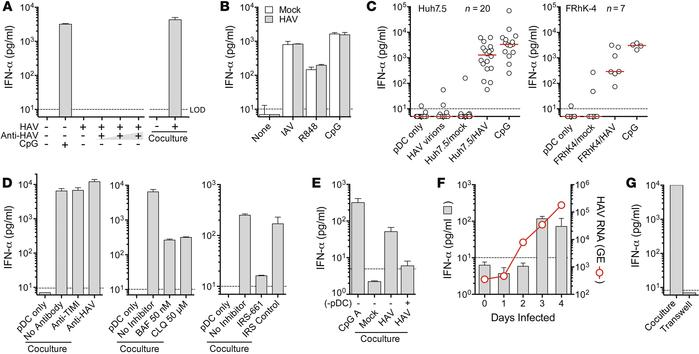 Coculturing with HAV-infected cells induces IFN-α production by pDCs. (A...
