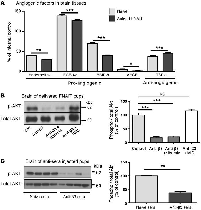 Anti-β3 antibody decreased proangiogenic and AKT signaling in brain. (A)...