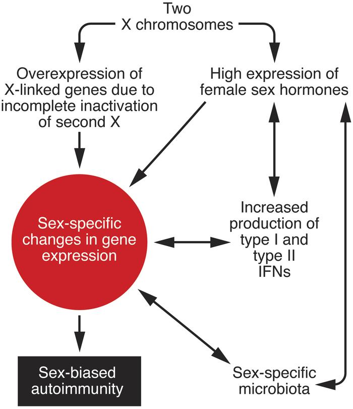 Sex-specific factors that lead to sex bias in autoimmunity. Sex-related ...