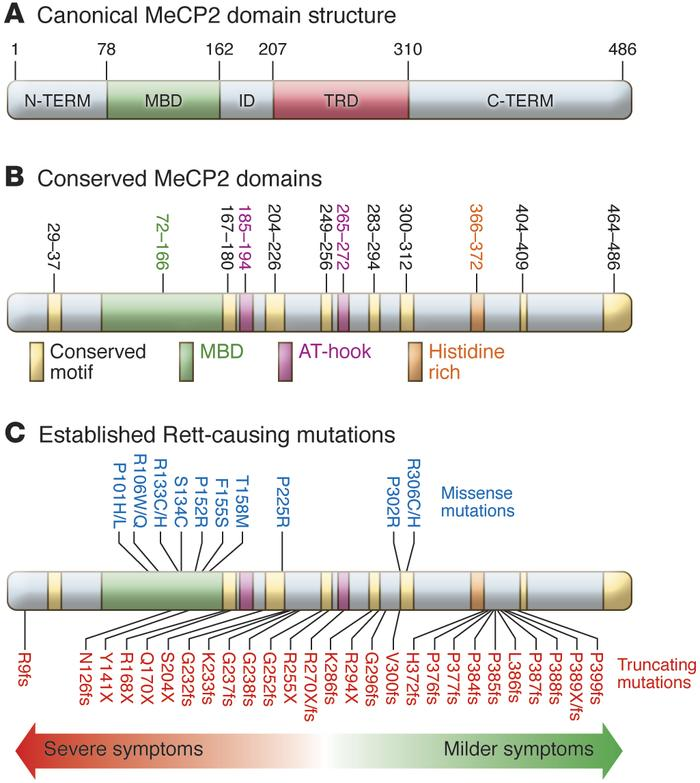 MeCP2 protein structure and Rett syndrome–causing mutations. (A) Human M...