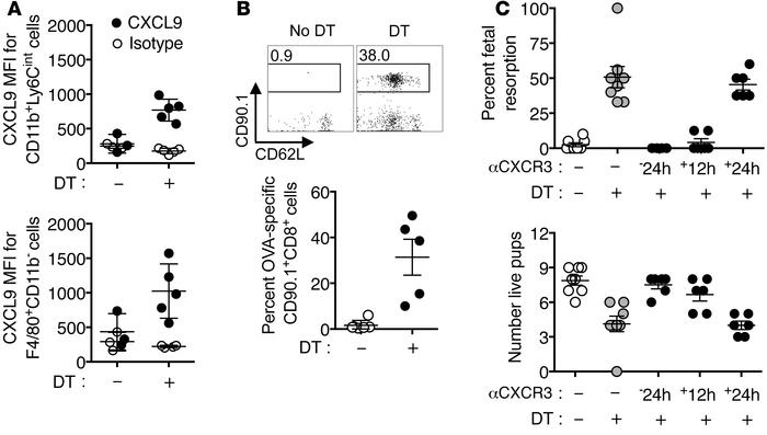 CXCR3 blockade protects against fetal wastage and decidual fetal-specifi...