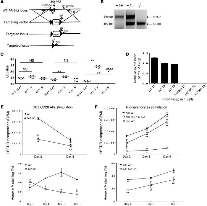 Generation of miR-142 KO mice and its impact on T cell functional respon...