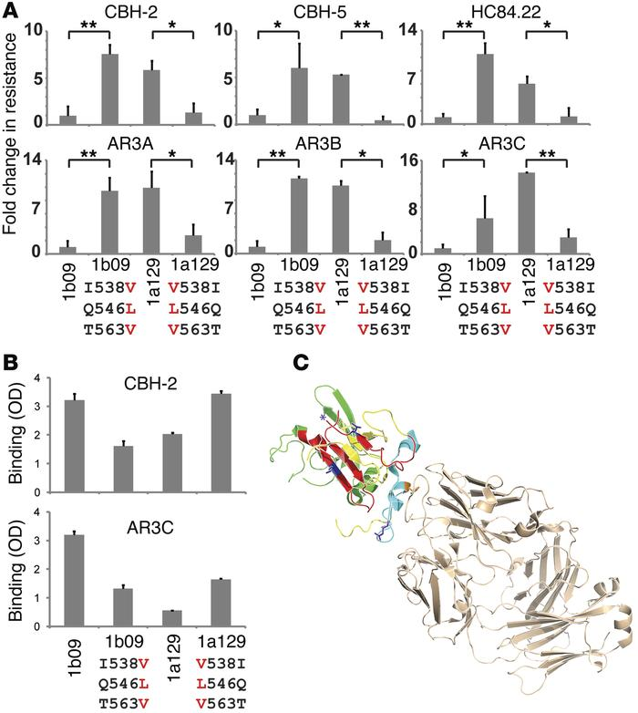 I538V/Q546L/T563V mutations in E2 confer resistance to 6 NC1 mAbs by red...