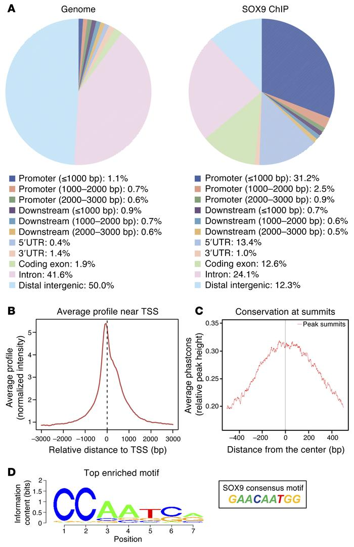 SOX9 chromatin binding in VCaP cells. (A) Pie charts demonstrating the d...