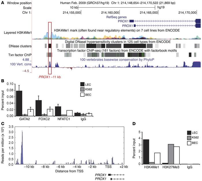 Occupancy of chromatin at the PROX1 –11 kb enhancer element. (A) PROX1 l...