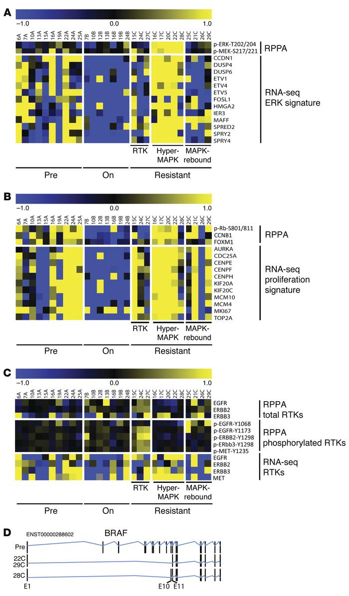Comparison of RPPA and RNA-seq data. (A) Alignment of ERK-related probes...