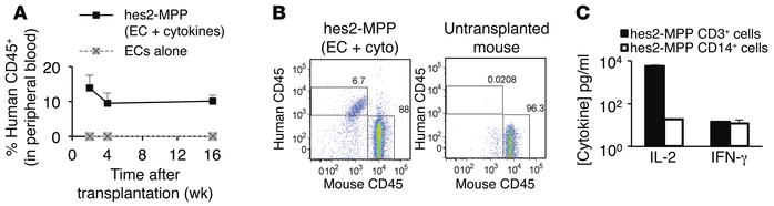hESCs differentiated in a vascular niche give rise to engrafting MPP wit...